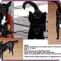Adopt A Pet :: Kylee - Fountain, CO