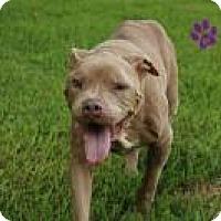 Adopt A Pet :: Noah - Gainesville, FL