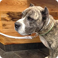 Adopt A Pet :: JERICHO - Oswego, IL