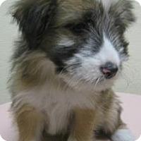 Adopt A Pet :: Bentley - Gary, IN