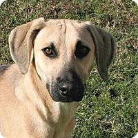 Adopt A Pet :: Rover - Lufkin, TX