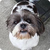 Adopt A Pet :: Chloey - Plainfield, IL