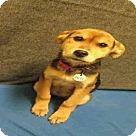 Adopt A Pet :: *AURA