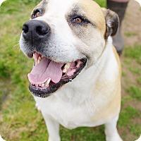 Adopt A Pet :: Tanner - Iola, TX