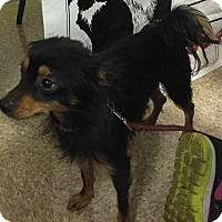 Adopt A Pet :: Foxy #3 - Loudonville, NY