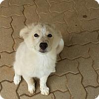 Adopt A Pet :: Tawny - Bedford, TX