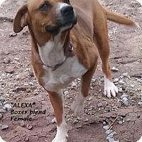 Adopt A Pet :: Regina (in process of adoption - El Cajon, CA