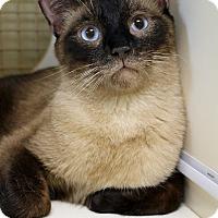 Adopt A Pet :: Cocoa - Encino, CA