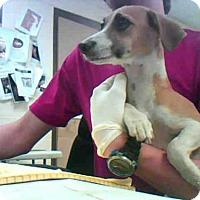 Adopt A Pet :: PETER - Conroe, TX