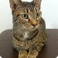 Adopt A Pet :: Matt - come see me at Valley View Petsmart! - Roanoke, VA