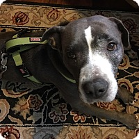Adopt A Pet :: Misty Lane - Baltimore, MD