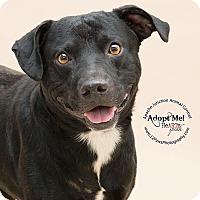 Adopt A Pet :: Hugo - Apache Junction, AZ
