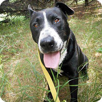 Border Collie/Labrador Retriever Mix Dog for adoption in Palmyra, Nebraska - Ella