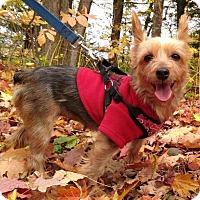Adopt A Pet :: Jasmine 3395 - Toronto, ON