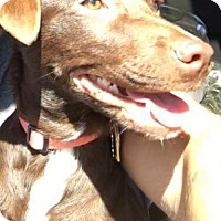 Adopt A Pet :: Olivia-ADOPTED - Livonia, MI