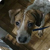 Adopt A Pet :: Blaze - Huntley, IL