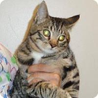 Adopt A Pet :: Knudsen - Wildomar, CA