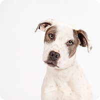Adopt A Pet :: Rogue - Ogden, UT