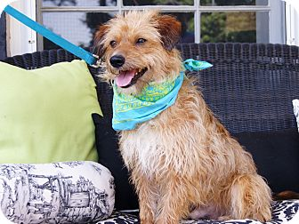 Terrier (Unknown Type, Small) Mix Dog for adoption in Princeton, Kentucky - Tanner