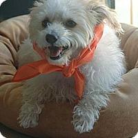 Adopt A Pet :: Giuseppe - Encino, CA