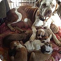 Adopt A Pet :: Wilma - Scottsdale, AZ