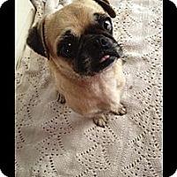 Adopt A Pet :: T Bone - Anaheim, CA