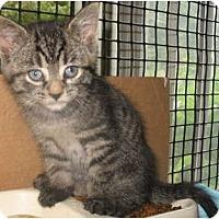 Adopt A Pet :: Lemarr - Acme, PA