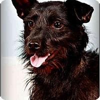Adopt A Pet :: Nola - Owensboro, KY
