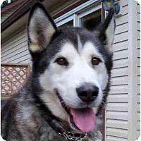 Adopt A Pet :: Merlin - Belleville, MI