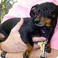 Adopt A Pet :: Gertrude - San Jose, CA