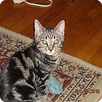 Adopt A Pet :: Grady - Riverside, RI
