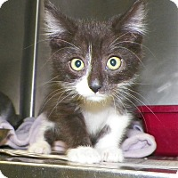 Adopt A Pet :: Issac - Dover, OH