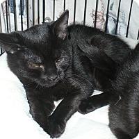 Adopt A Pet :: Minette - Colmar, PA