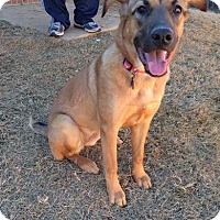 Adopt A Pet :: Molly - Hagerstown, MD
