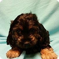 Adopt A Pet :: Pandora - Hazard, KY