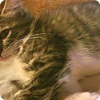 Adopt A Pet :: Lula - McDonough, GA