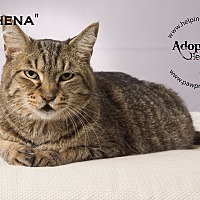 Adopt A Pet :: Athena - St. Charles, IL