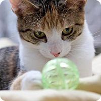 Adopt A Pet :: Bobbi and Booster - Homewood, AL
