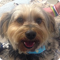 Adopt A Pet :: Benjamin - Allentown, PA