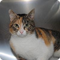 Adopt A Pet :: Danielle - Windsor, VA