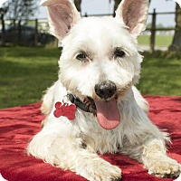 Adopt A Pet :: Gabriel--Sweet boy--N fOSTERED IN CT - Alvin, TX