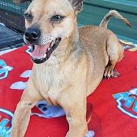 Adopt A Pet :: Cooper - Pipe Creek, TX