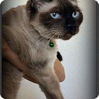Adopt A Pet :: Clover - Gilbert, AZ