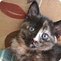 Adopt A Pet :: Laurelei - Long Beach, NY