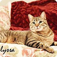Adopt A Pet :: Alyssa - Xenia, OH
