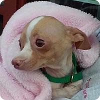 Adopt A Pet :: Jelly Bean - San Marcos, CA
