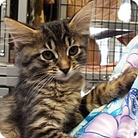 Adopt A Pet :: Wonder Woman - Grants Pass, OR