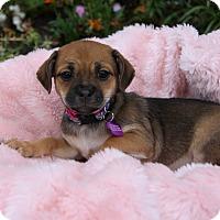 Adopt A Pet :: MAUREEN - Newport Beach, CA