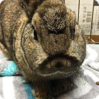 Adopt A Pet :: Barnaby - Edinburg, PA