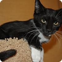 Adopt A Pet :: Tater - Whittier, CA